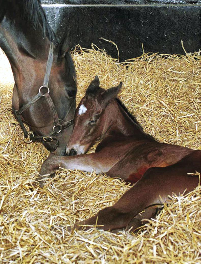 FOALING FEATURE 2019: Caring for the newborn foal