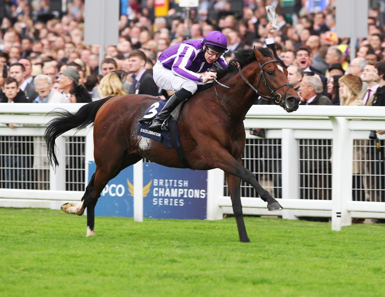 SIRE REVIEWS: Standing at Castlehyde Stud : Excelebration