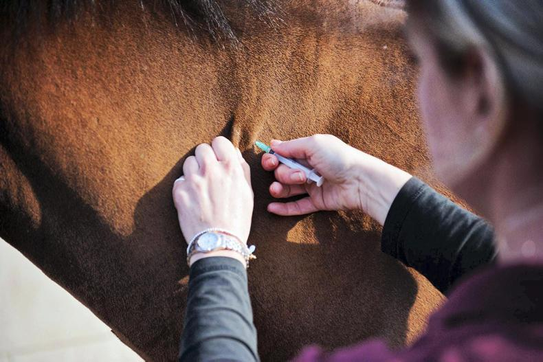 EQUINE FLU: British racing back up and running
