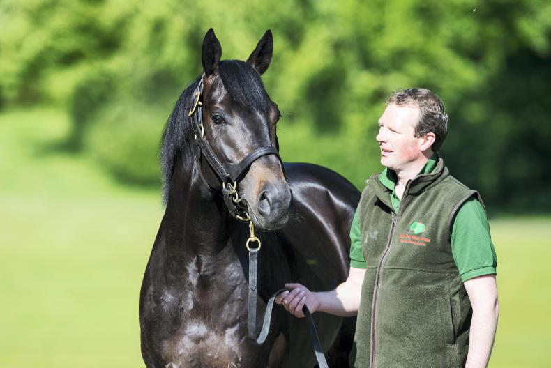 SIRE REVIEWS: Standing at Gilltown Stud : Harzand