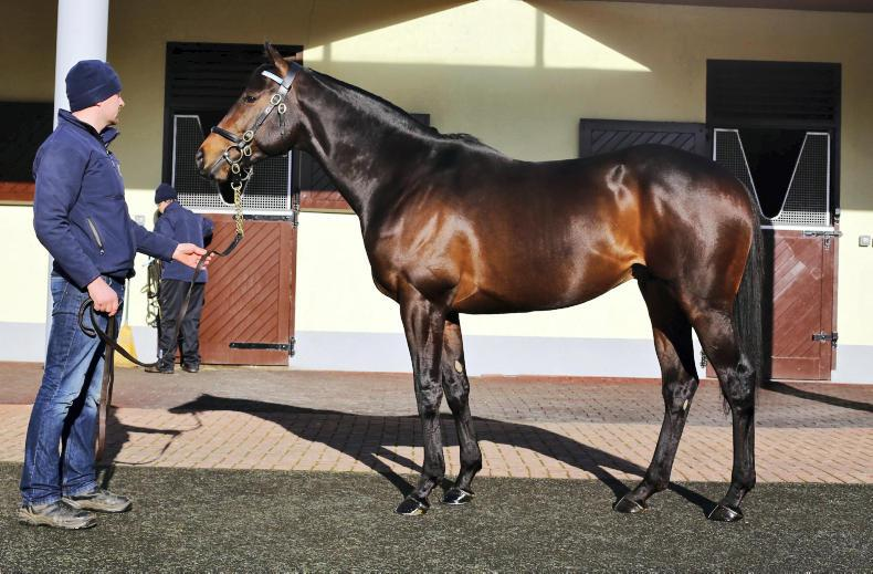 SIRE REVIEWS: Standing at Derrinstown Stud : Awtaad