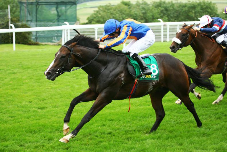 SIRE REVIEWS: Standing at Castlehyde Stud : Requinto