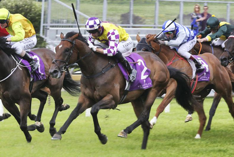 NEW ZEALAND: Surely Sacred keen for Derby