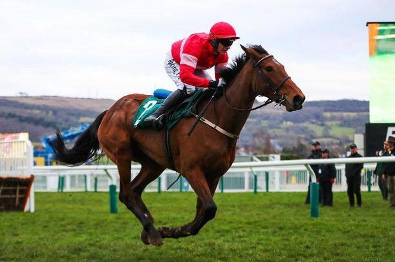 Mullins-Walsh combination could strike gold with Laurina at Cheltenham