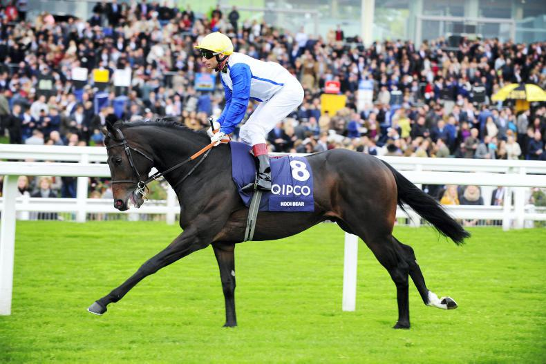SIRE REVIEWS: Standing at Rathbarry Stud : Kodi Bear