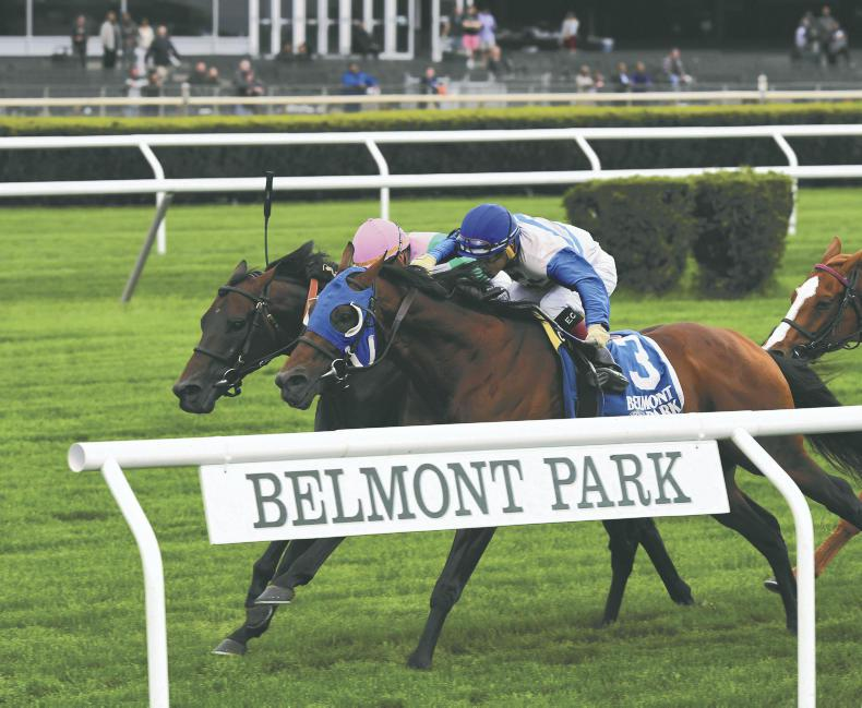 SIRE REVIEWS: Standing at Clongiffen Stud : Smooth Daddy