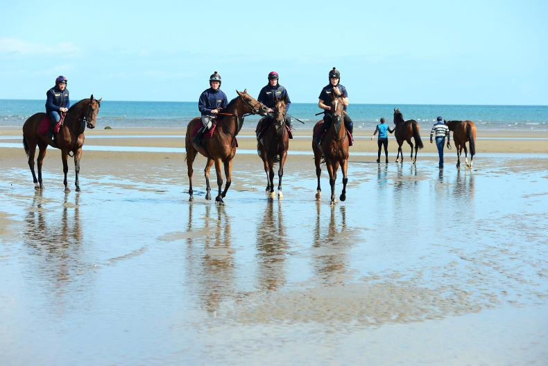 NEWS: Locals battle to save beach for horses