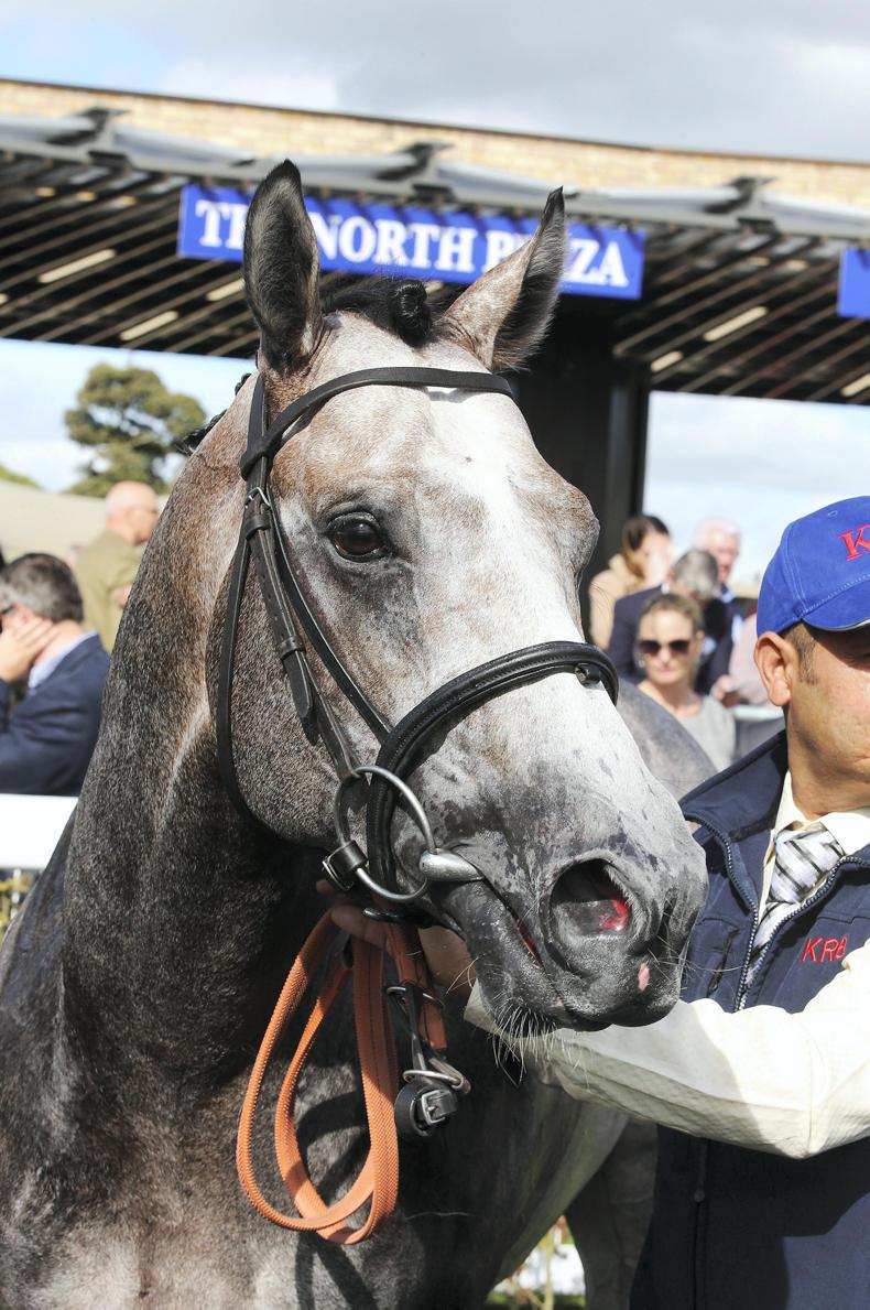 SIRE REVIEWS: Standing at Whitsbury Manor Stud : Havana Grey