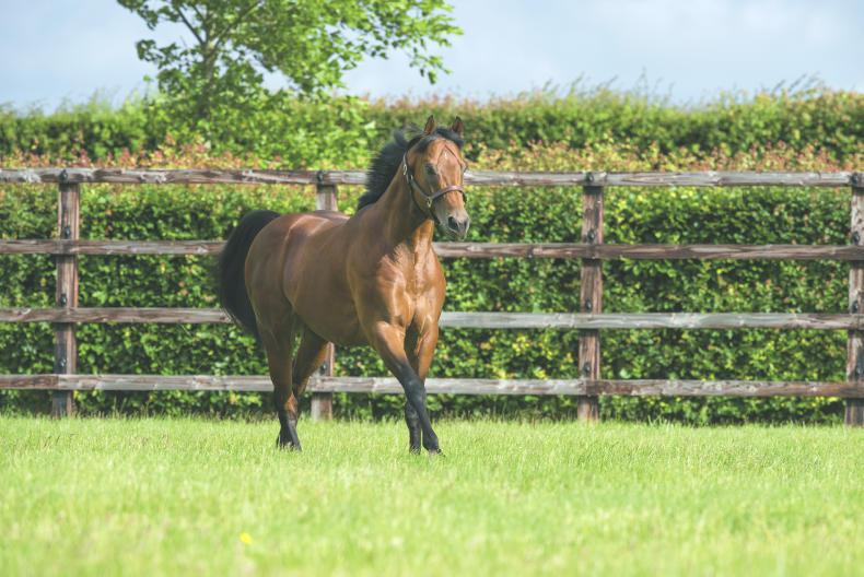 SIRE REVIEWS: Standing at Dalham Hall Stud : Territories
