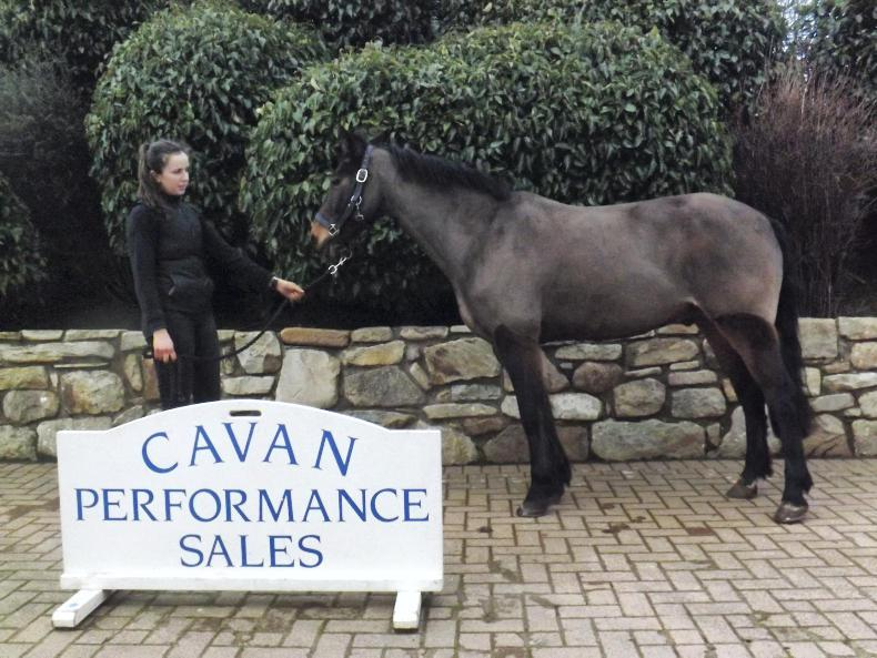 CAVAN SALES:  Buyers out in force as trade returns  €10,000 sale-topper
