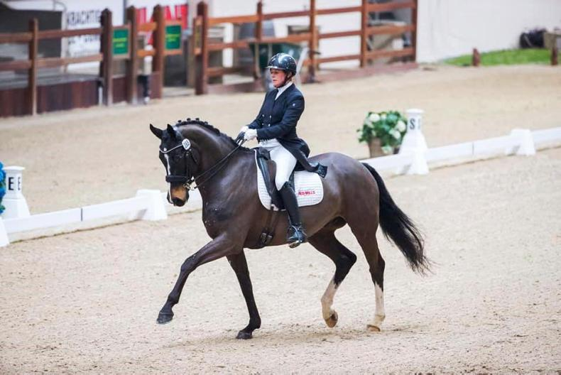 DRESSAGE:  Top 10 finish for Holstein