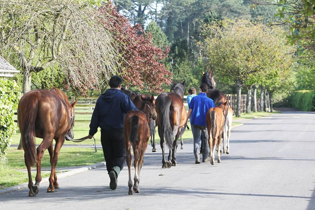 Equine influenza is spreading