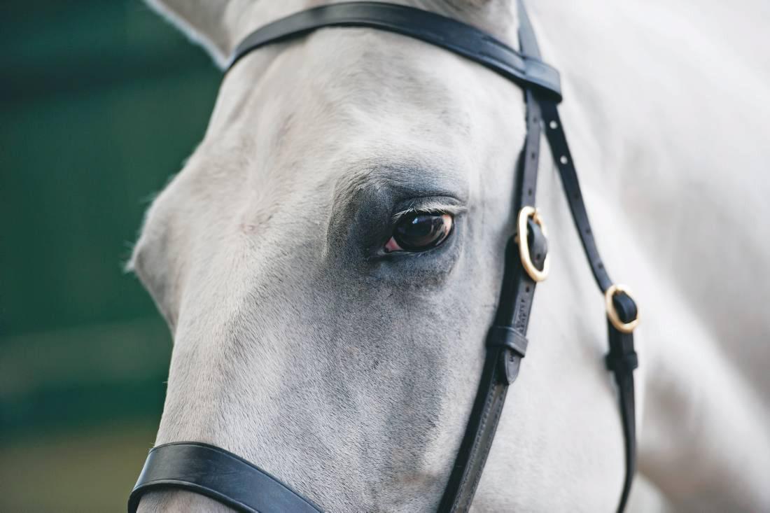 Tattersalls ventures into sport horse sales