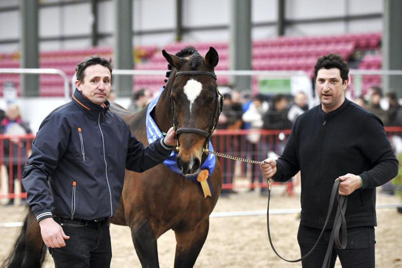 COMMENT:  Stallion show proves a shot in the arm for industry
