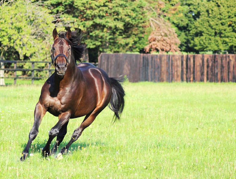 SIRE REVIEWS: Standing at Anngrove Stud : Marcel