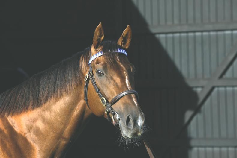 SIRE REVIEWS: Standing at Sunnyhill Stud : Casamento
