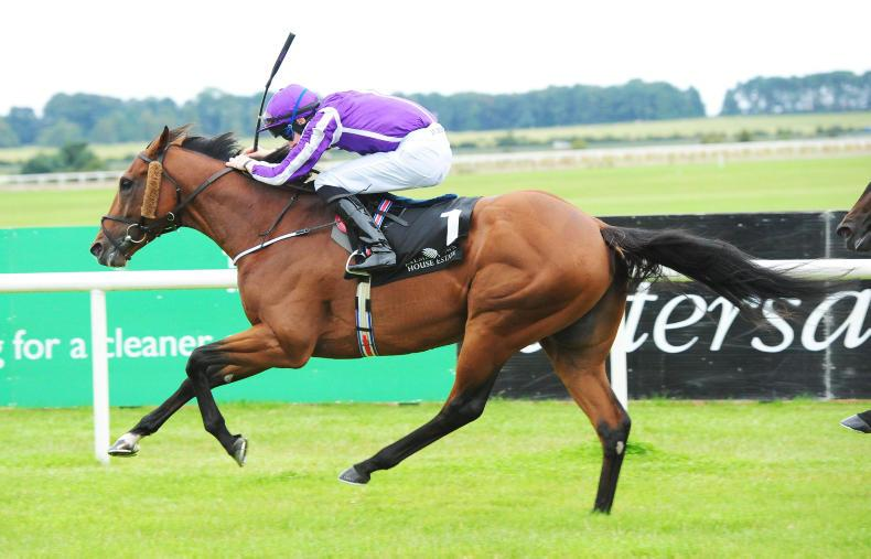 SIRE REVIEWS: Standing at Grange Stud : Leading Light