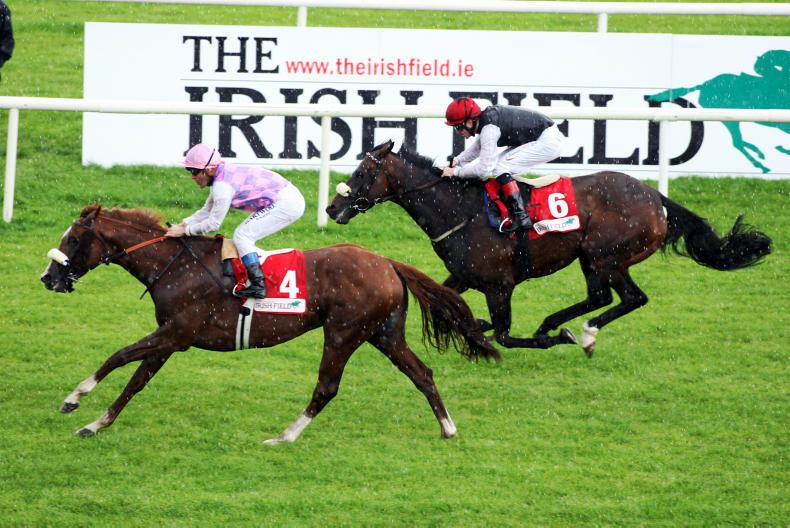 SIRE REVIEWS: Standing at The Beeches Stud : Sans Frontieres