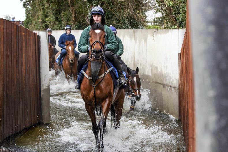 NEWS: Tiger Roll hot favourite for Aintree repeat