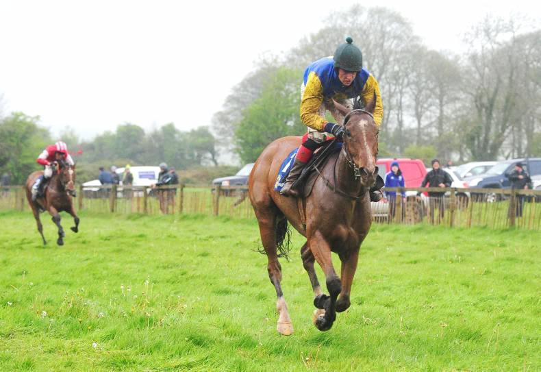 Maupiti express horse betting autohotkey csgo betting