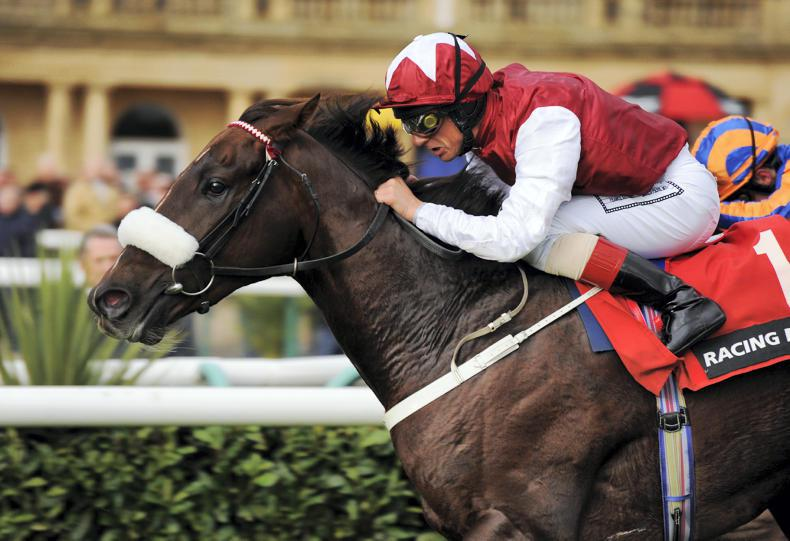 BREEDING INSIGHTS: Boost for Casamento's new role