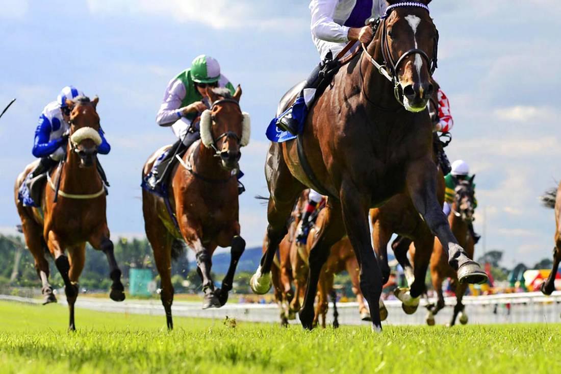 The war against wrongdoers in Irish racing