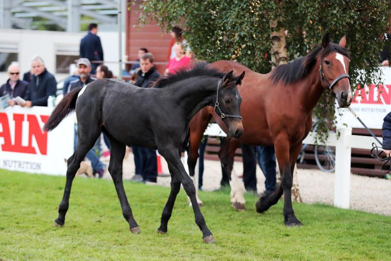 BREEDING 2019: 'Stack the odds in your favour by remaining critical of mares'