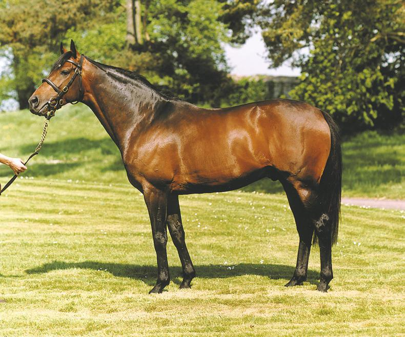 BREEDING INSIGHTS: The most influential stallions at Cheltenham