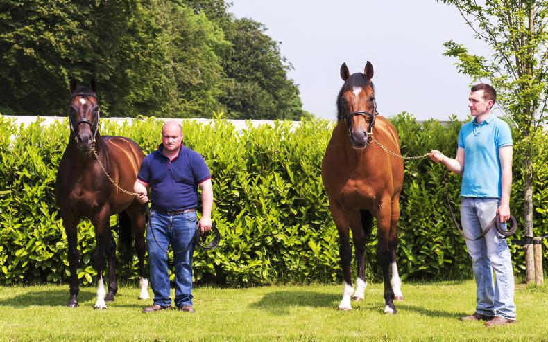 BREEDING INSIGHTS: The continuing influence of Champs Elysees