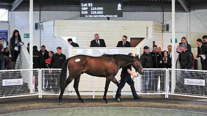 SALES: Swiss Spirit colt tops Tattersalls Ascot Breeze-Up