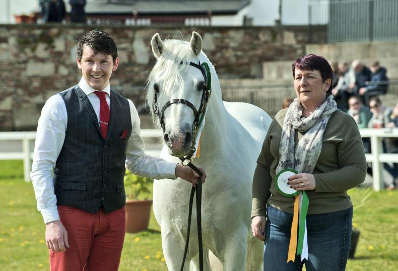 CPBS SPRING WEEKEND: Sun shines on Clifden stallion parade