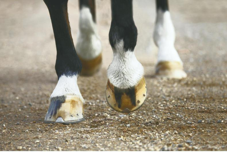 HOOF CARE FEATURE 2019: Feeding for better feet