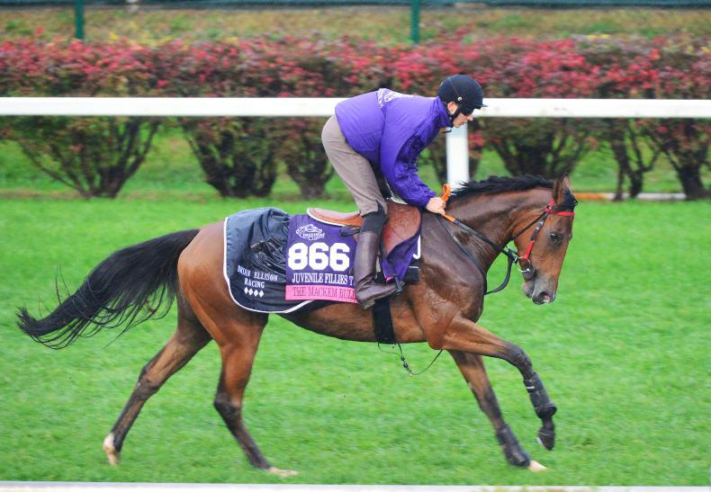 BREEDING INSIGHTS: The Bullet is aimed at a classic target