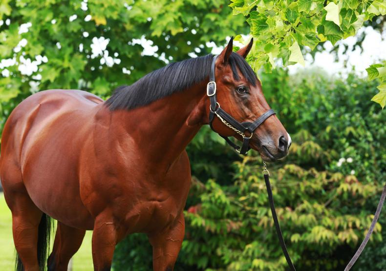 OSARUS BREEZE UP SALE: Anodin and Siyouni shine at Osarus