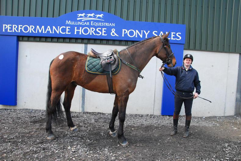 MULLINGAR SALES: Gelding from Clover Hill family tops sale at €6,900