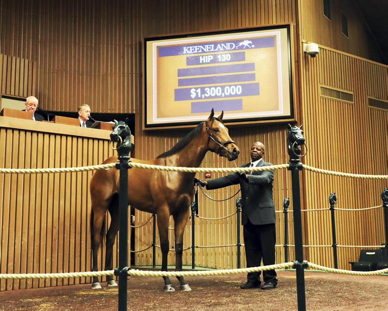SALES: Tapit's daughter becomes a Keeneland millionairess