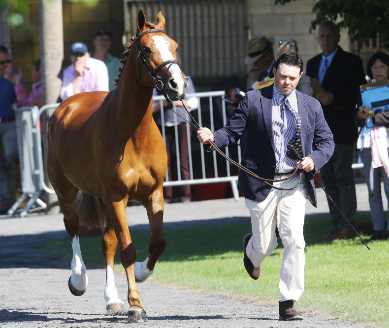 PONY TALES:  Michael and Lucca on the injured list