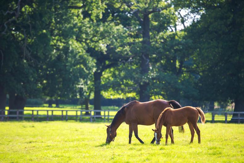 HORSE SENSE: Grassland management feature 2019