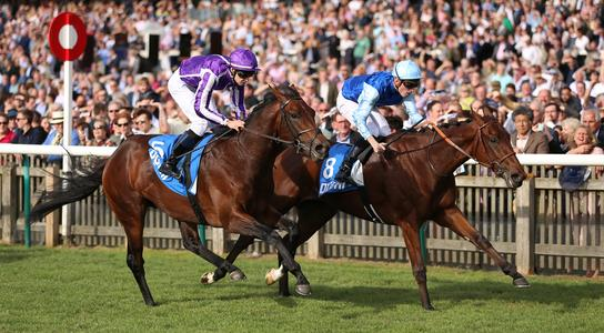Fabre still favouring French Guineas for Persian King