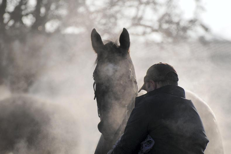 NEWS:  WRC Report - equine sector worst for breaches at 84%