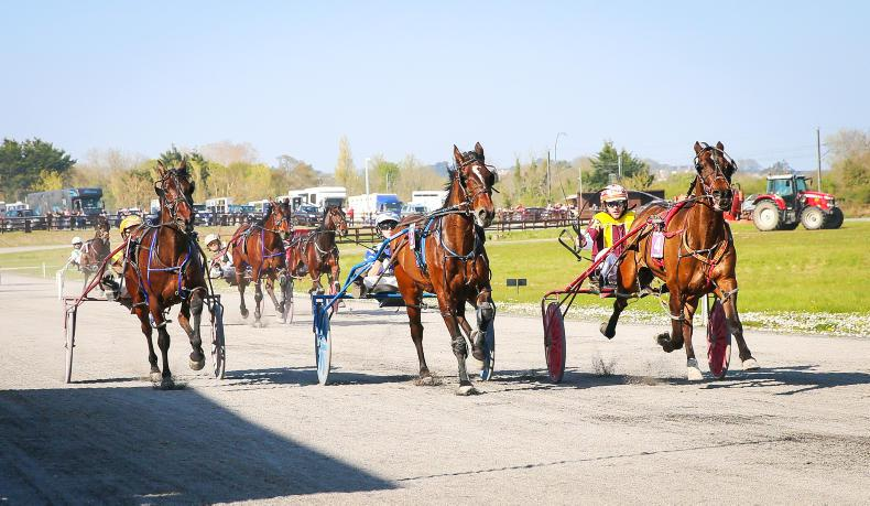 HARNESS RACING: Brave 'Biccie' goes in again at Portmarnock