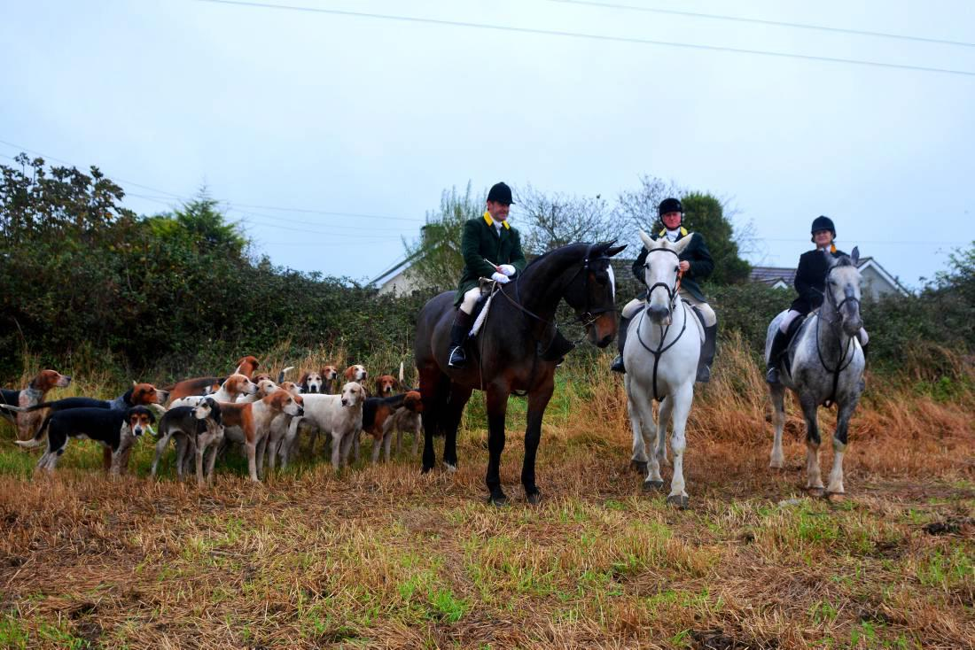 Fingal Harriers have a rich history of hunting
