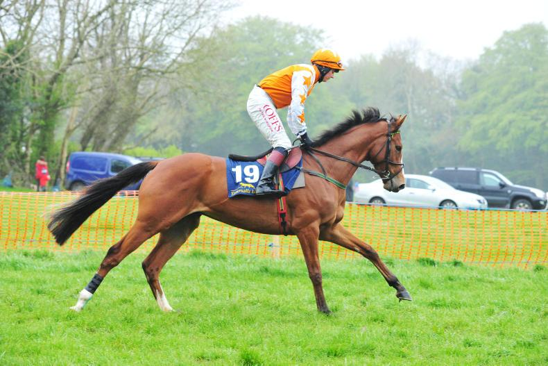 POINT-TO-POINT: Eogháin Ward: An opportunity for smaller handlers