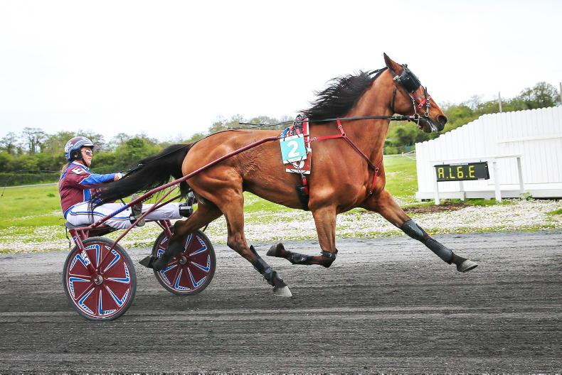HARNESS RACING: Erin and Belle deliver victory for Redmond at Portmarnock
