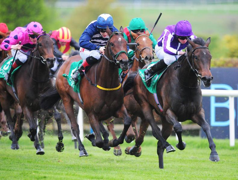 NAVAN SUNDAY: Reality bites Ballydoyle favourites