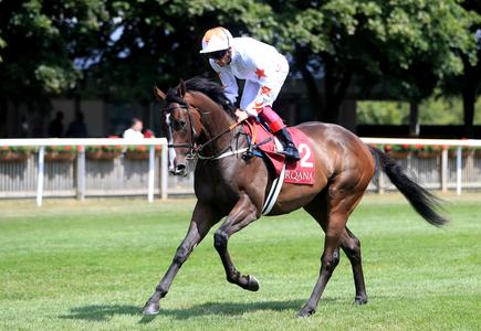 Guineas disappointment Advertise set to take French test