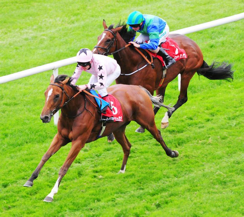 TATTS IRE GORESBRIDGE FLAT BREEZE-UP: Early prospects on offer at Fairyhouse