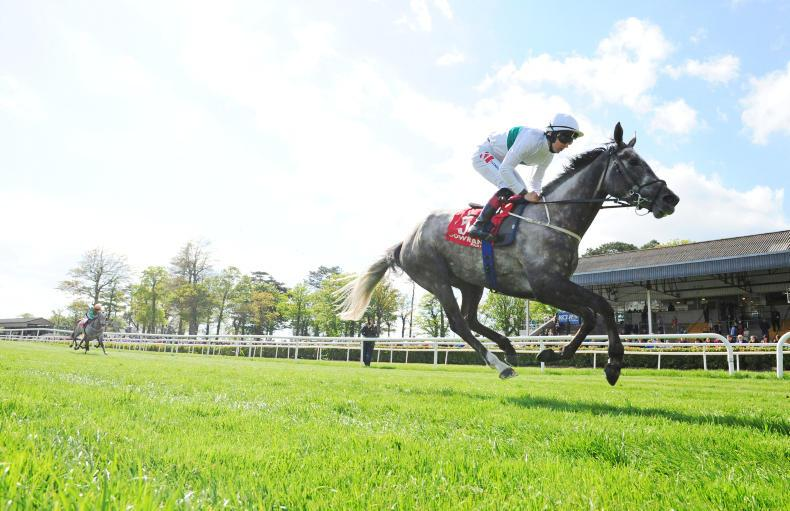 GOWRAN PARK SUNDAY: Who's Steph shows her ability