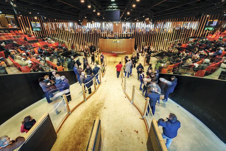 Coolmore spends €1.1 million on American Pharoah colt