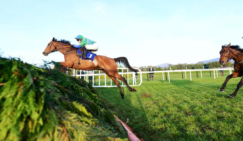 POINT-TO-POINT: Eogháin Ward: Handlers spotting Hunter Chase opportunities